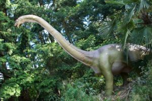 Brachiosaurus for web