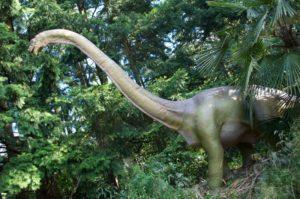 Brachiosaurus for web